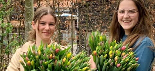 Bosje Tulpen Lunteren