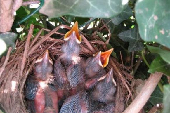 Kijk naar de vogels II - Cock Kroon