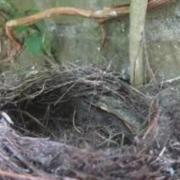 Kijk naar de vogels III Cock Kroon Lunteren
